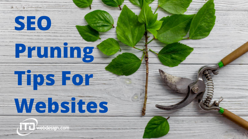 seo pruning tips